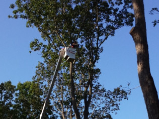 Tree Removal, Tree Pruning, and More