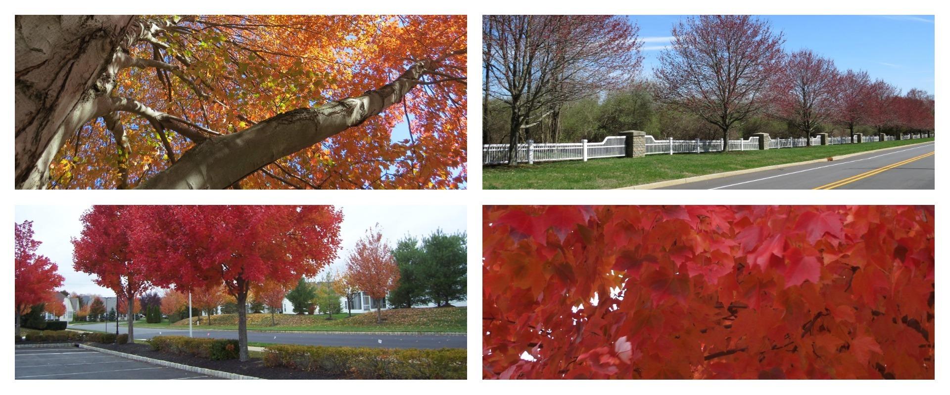 Aspen Tree Blog