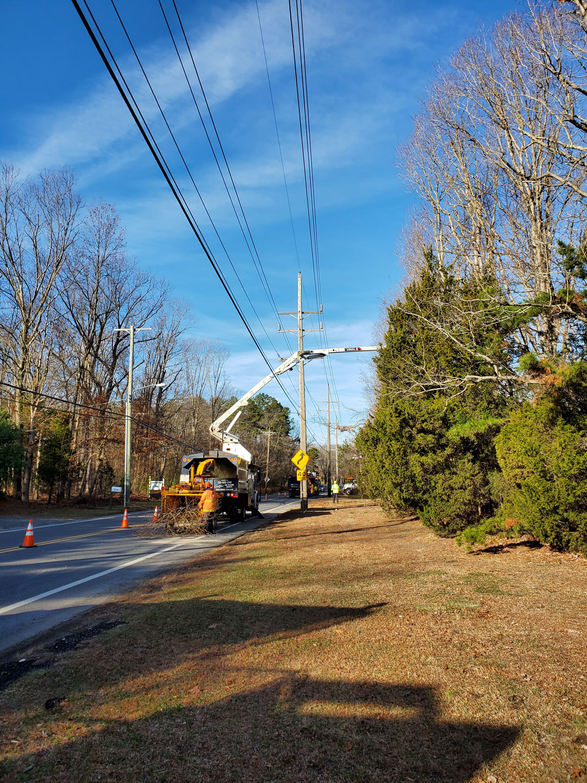 Tree Pruning Removal Colts Neck